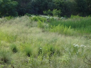 If you look past the falling-down wire fence and the drink cans strewn through the underbrush, you can see this dreamy view of the pond area out back.